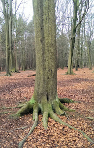 Gruffalo Tree